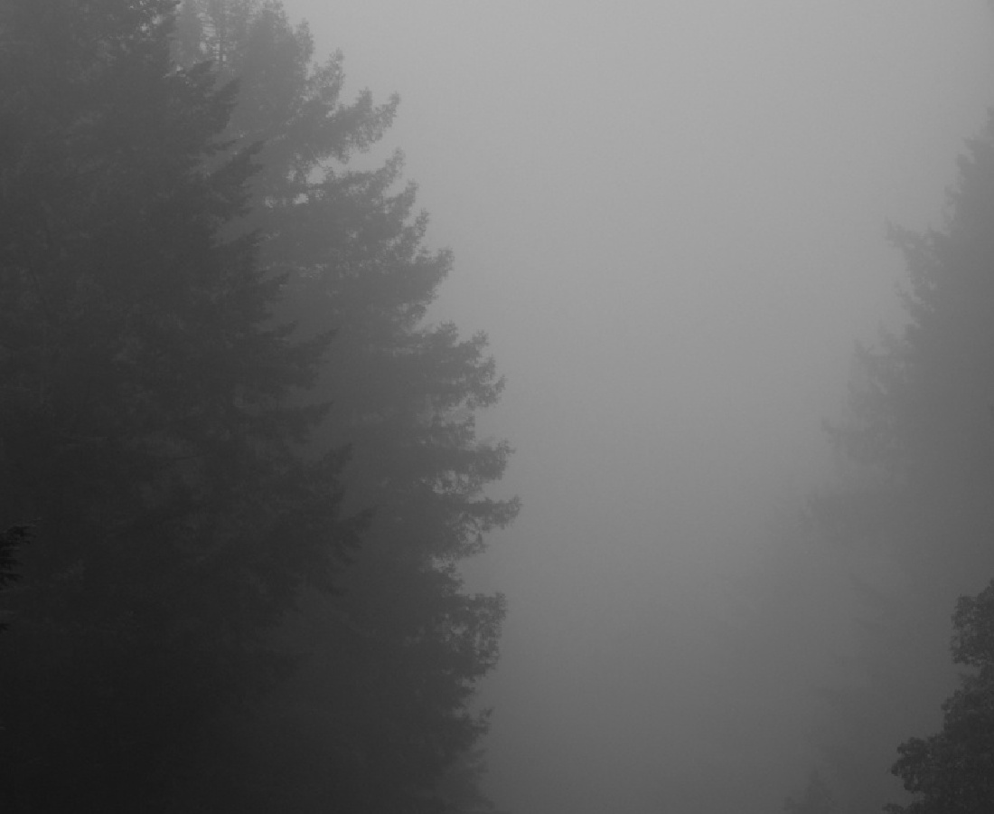 <p><span class=&#34;Apple-style-span&#34; style=&#34;font-family: verdana, arial, helvetica; font-size: 11px; line-height: 14px;&#34;><b>Miya Ando</b><br /><i>Foggy Redwoods Going Home</i>, 2014<br /><br /></span></p>